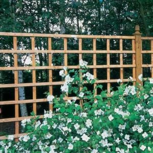 Forest Arley Trellis 61 x 183cm (Heavy Duty)
