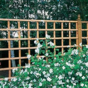Forest Arley Trellis 183 x 183cm (Heavy Duty)