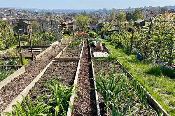 vegetable beds in a large public allotment