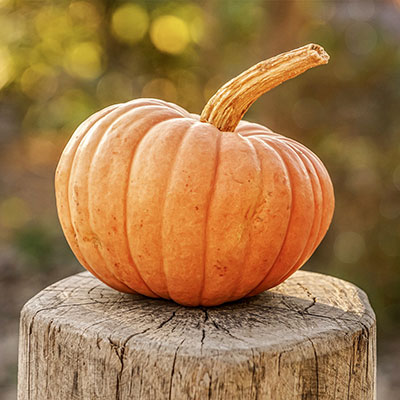 Growing a Pumpkin - A Tale of Obsession