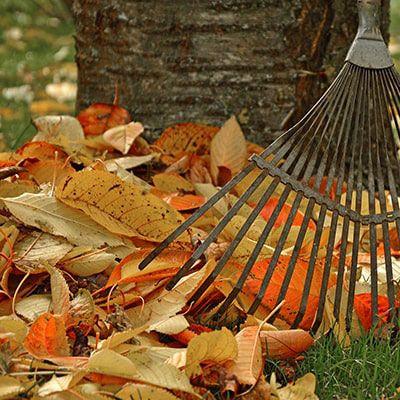 The November Garden Guide