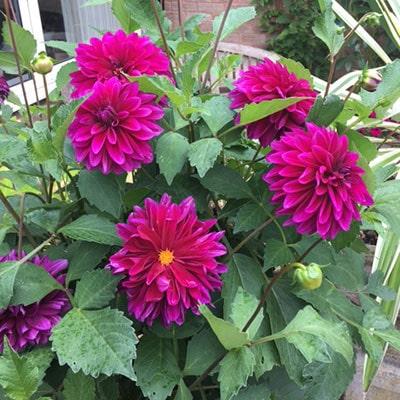 Your September Garden