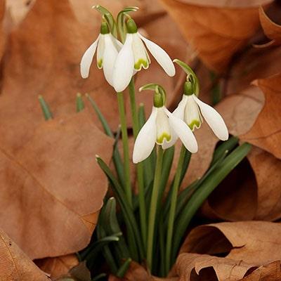 The February Garden Guide
