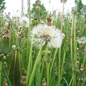 Weeds - Nature's Opportunists