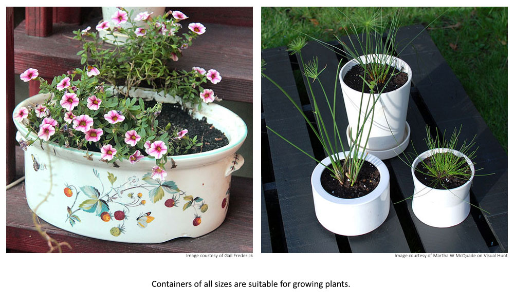 Containers of all sizes are suitable for growing plants