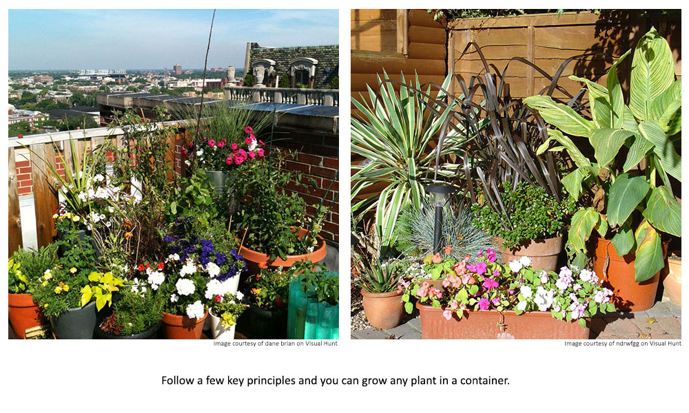 Follow a few key principles and you can grow any plant in a container