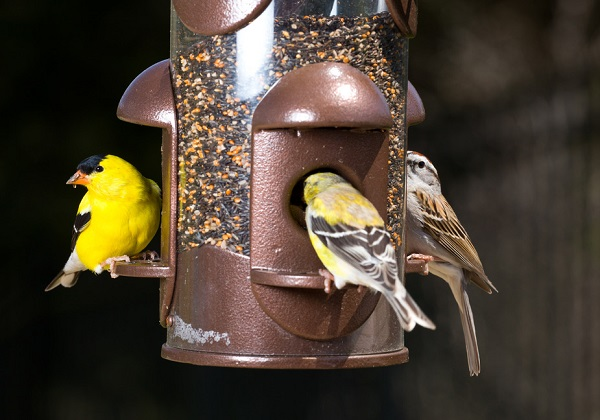 A guide to DIY bird feeders