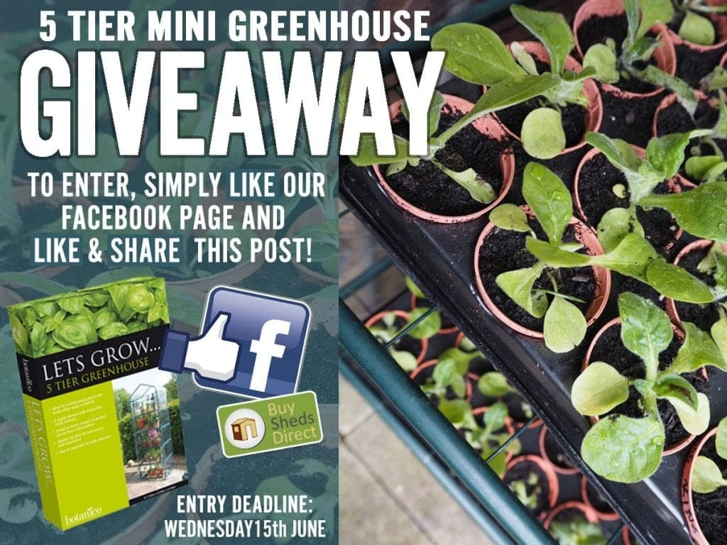 Mini Greenhouse Giveaway