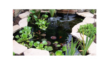 Small ponds for small gardens