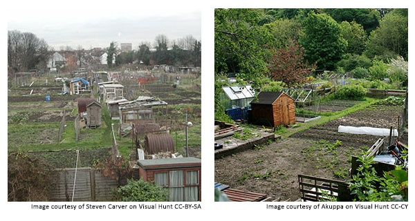 2 pictures of allotments, including plots and sheds