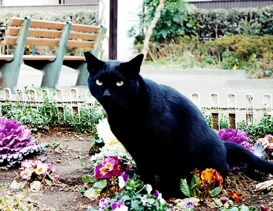 Cat in the Flower Bed