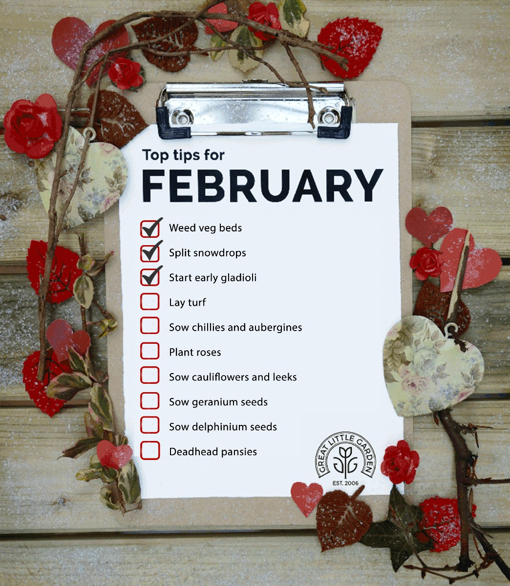 Top February Gardening Tips